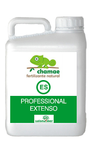 CHAMAE ES